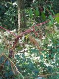 Красивые ягоды и заводы Стоковая Фотография RF