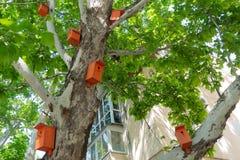 Красивые яркие оранжевые birdhouses на плоском дереве стоковые изображения
