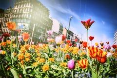 Красивые flwers весны Стоковые Фото