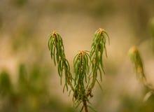 Красивые labradors болота в естественной среде обитания Стоковая Фотография RF