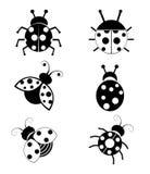Красивые Ladybugs изолированные на белой предпосылке Стоковая Фотография RF