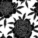 Красивые monochrome черно-белые безшовные пионы предпосылки нарисованные вручную Конструируйте для поздравительных открыток и при иллюстрация вектора