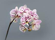 Красивые orhids цветков Стоковое фото RF