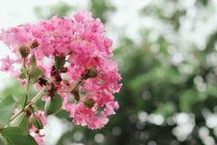 Красивые pinky цветки с предпосылкой bokeh Стоковая Фотография RF