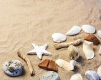 Красивые Seashells на песке Стоковые Фото