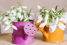 Красивые snowdrops цветут в малой декоративной вазе моча чонсервной банкы Стоковая Фотография