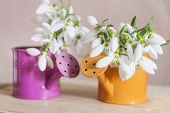 Красивые snowdrops цветут в малой декоративной вазе моча чонсервной банкы Стоковое Изображение