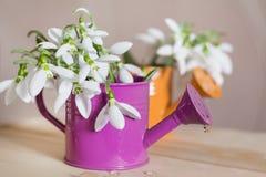Красивые snowdrops цветут в малой декоративной вазе моча чонсервной банкы Стоковые Изображения
