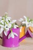 Красивые snowdrops цветут в малой декоративной вазе моча чонсервной банкы Стоковое Изображение RF