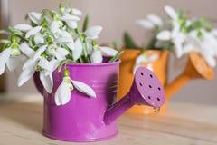 Красивые snowdrops цветут в малой декоративной вазе моча чонсервной банкы Стоковые Фотографии RF