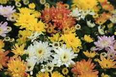 Красивые summerflowers Стоковая Фотография