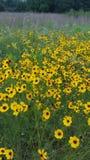 Красивые wildflowers весны! Стоковые Фото