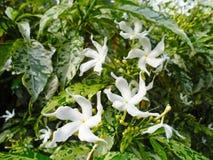 Красивые wildflowers в Азии Стоковое фото RF