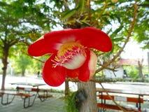 Красивые wildflowers в Азии Стоковое Изображение RF