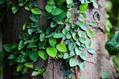Красивый абстрактный зеленый цвет выходит польза селективного фокуса для предпосылки Стоковое Фото