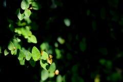 Красивый абстрактный зеленый цвет выходит польза селективного фокуса для предпосылки Стоковые Фотографии RF