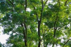 Красивый абстрактный зеленый цвет выходит польза селективного фокуса для предпосылки Стоковая Фотография