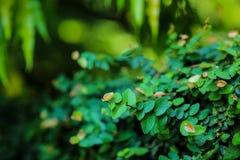Красивый абстрактный зеленый цвет выходит польза селективного фокуса для предпосылки Стоковые Фото