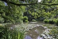 Красивый английский сад воды в лете Стоковые Фото