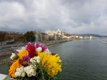 Красивый ландшафт Будапешта с цветками Стоковые Фото