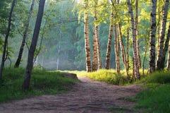 Красивый ландшафт весны с birchwood Стоковая Фотография RF