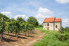 Красивый ландшафт виноградника и старая церковь Стоковые Изображения