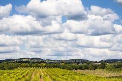 Красивый ландшафт виноградника Стоковые Изображения RF