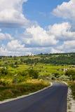 Красивый ландшафт виноградника Стоковое Изображение