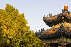 Красивый ландшафт в Пекине стоковые изображения rf
