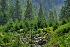 Красивый ландшафт гор с передней частью сосен стоковая фотография
