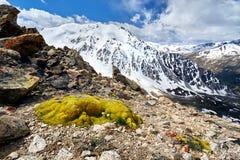 Красивый ландшафт гор стоковые изображения