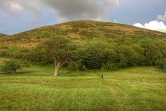 Красивый ландшафт, Девон, Англия Стоковая Фотография RF