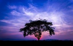 Красивый ландшафт дерева Стоковое фото RF