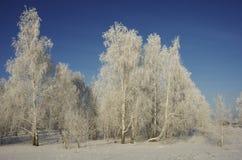 Красивый ландшафт леса зимы в морозном солнечном дне Стоковая Фотография RF
