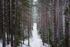 Красивый ландшафт леса на холодный зимний день с coni Стоковое Изображение RF