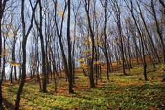 Красивый ландшафт леса осени с деревьями Стоковое фото RF