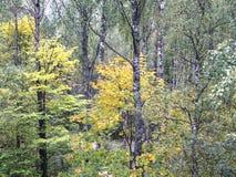 Красивый ландшафт леса осени Стоковая Фотография