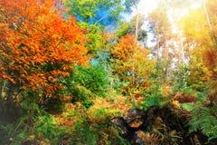 Красивый ландшафт леса осени Стоковые Изображения