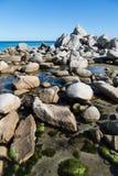 Красивый ландшафт лета морского побережья. стоковые фото