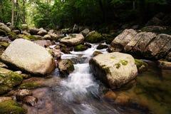 Красивый ландшафт лета реки в одичалой области стоковые изображения