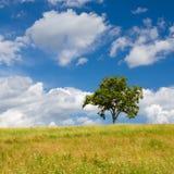 Красивый ландшафт лета с сиротливым деревом Стоковая Фотография RF
