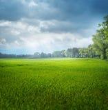 Красивый ландшафт лета rular области Стоковые Фотографии RF
