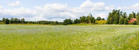 Красивый ландшафт завальцовки Стоковые Фото