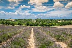 Красивый ландшафт зацветая поля лаванды, сиротливого uphil дерева стоковое фото rf