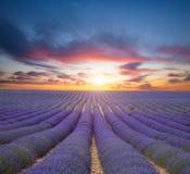 Красивый ландшафт зацветая поля лаванды Стоковые Изображения RF