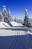 Красивый ландшафт зимы в катании на лыжах Cross County гор Стоковые Изображения RF