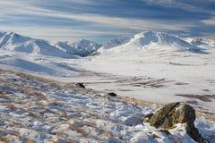 Красивый ландшафт зимы, горы Россия Altai Стоковая Фотография RF