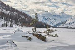 Красивый ландшафт зимы, горы Altai, Сибирь, Россия Стоковая Фотография RF