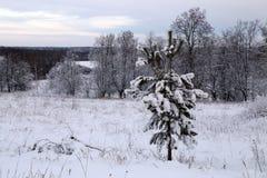 Красивый ландшафт зимы на заходе солнца стоковые изображения