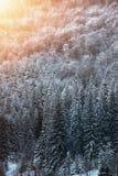 Красивый ландшафт зимы, снег покрыл деревья Стоковая Фотография RF